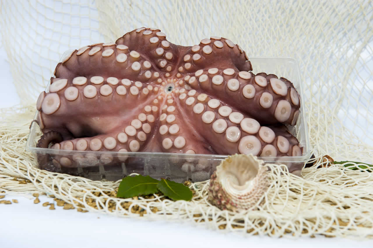 Octopus in Tray